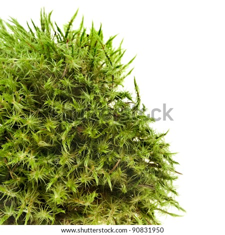 green moss isolated on white