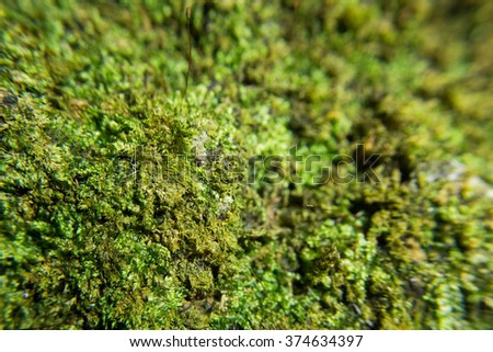 green moss macro shot for abstract background
