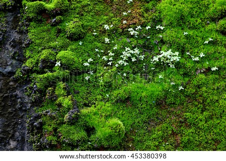 Green moss on old wall. - stock photo
