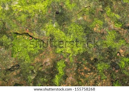 Green Moss on stone Texture - stock photo
