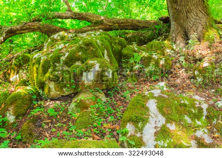 Green moss on the rocks