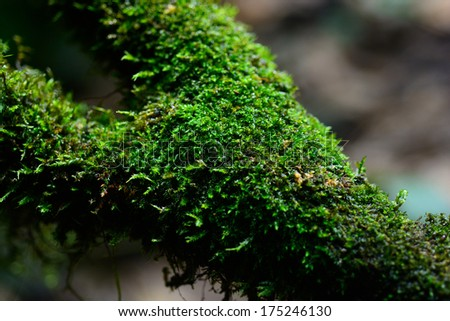 Green moss on the trees - stock photo