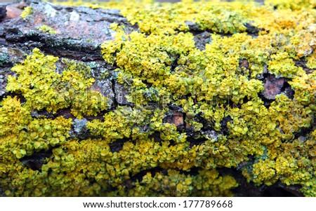 green moss on tree bark - stock photo