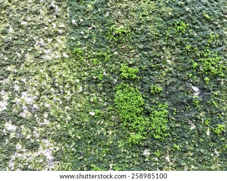 green moss on wall - stock photo