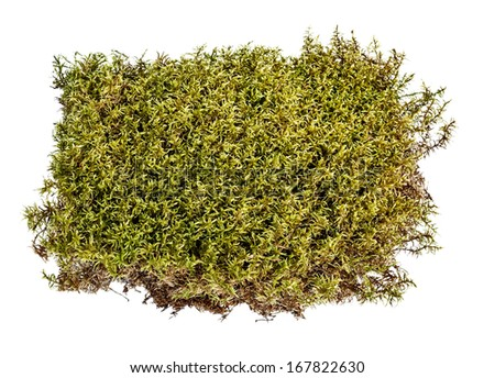 Green moss on white - stock photo