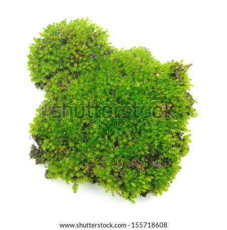 Green moss on white background - stock photo