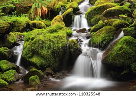 Green Moss Stream, Olympic National Park - stock photo