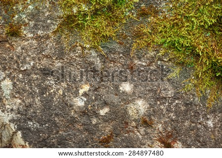 Green moss with dry soil as background - stock photo