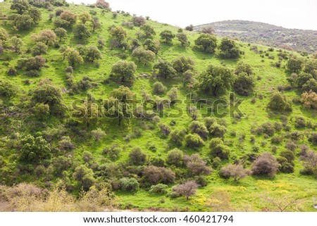 Green mount in spring. Golan heights, North Israel.