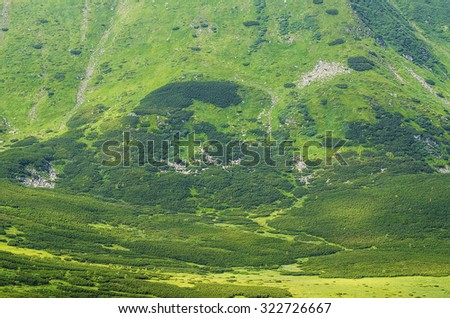 Green mountain background with grass and alp pines