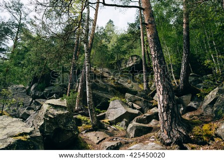 Green Mountain Forest background. Misty pine forest landscape. Rock and stone - stock photo
