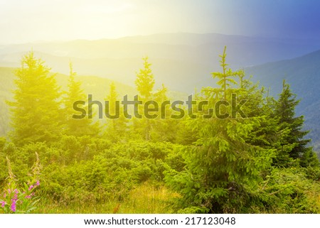 green mountain forest in a rays of sun - stock photo