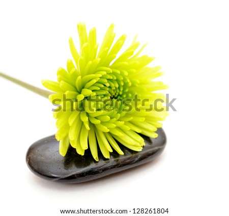 green mum flower and black stone on white background