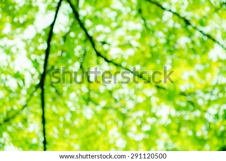 green natural bokeh blur background - stock photo