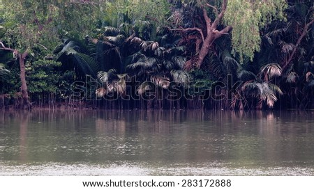 green natural rain forest plant and trees brown water and blue sky over mangrove of the wide BANGPAKONG river estuary in THAILAND - stock photo