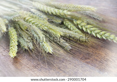Green natural wheat and rye on wooden background - stock photo