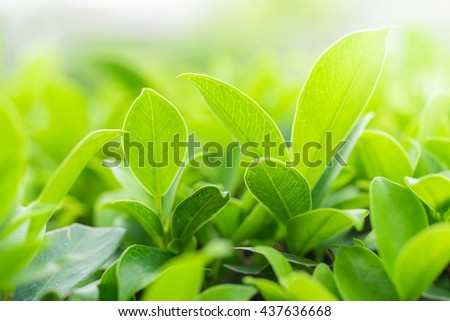 Green nature background with copy space using as background or wallpaper.