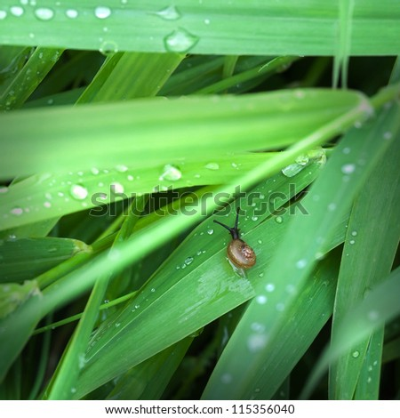 Green nature background with wet leaves and small snail - stock photo