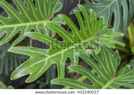 green nature foliage background,plant abstract background