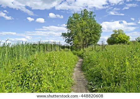 Green nature landscape. Summer  landscape with green grass under blue skies - stock photo