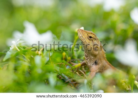 Green nature lizard in the nature.