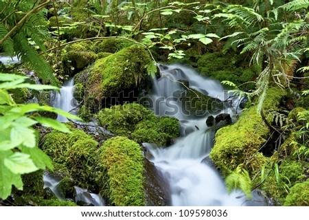 Green Nature - Mossy Creek with Mountain Stream in the National Olympic Forest, Washington USA.