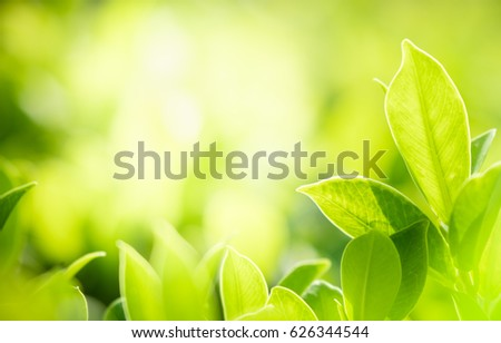 Green nature with copy space using as natural background or wallpaper.