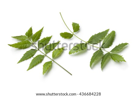 Green Neem twigs and leaves on white background - stock photo