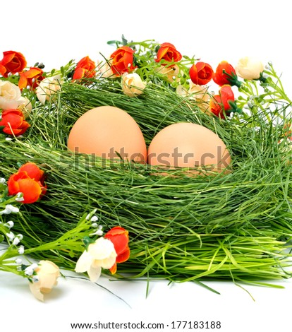 Green nest with eggs isolated on a white background - stock photo