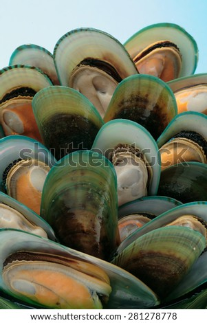 Green New Zealand mussels - stock photo