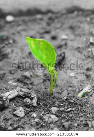 Green newborn sapling on soil