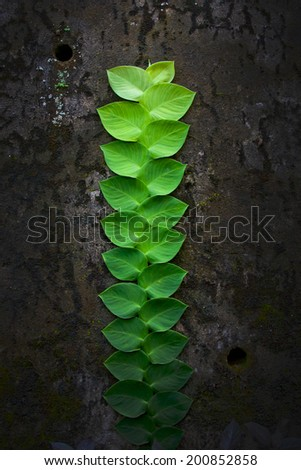 Green nice plant on an old grungy wall - stock photo