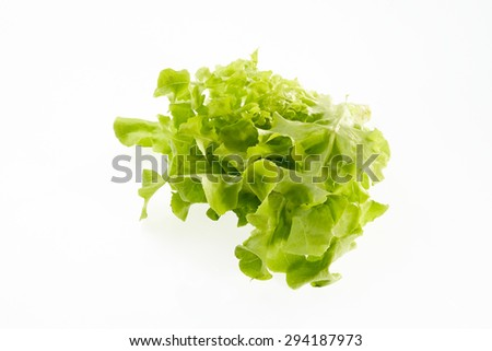 Green oak for salad isolated on white background