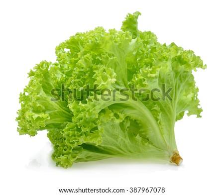 Green oak lettuce on white background. - stock photo