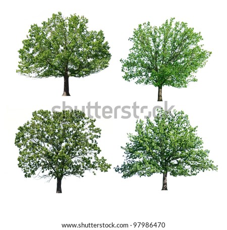 green oak trees isolated on white - stock photo