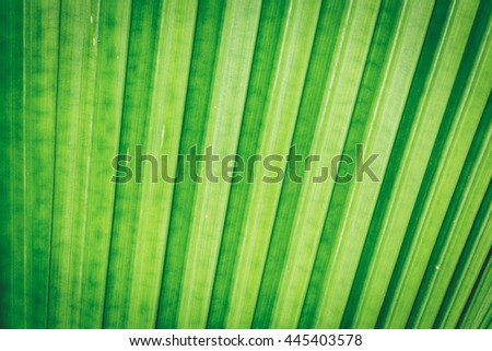 green of the shadow leaf background