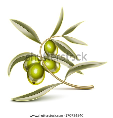 Green olives on a branch - stock photo