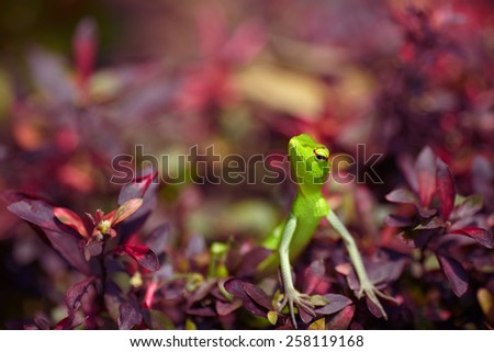 Green on red - stock photo
