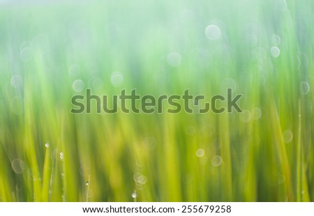 green on summer background - stock photo