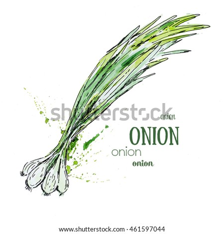 Green onion watercolor painting illustration isolated on white background