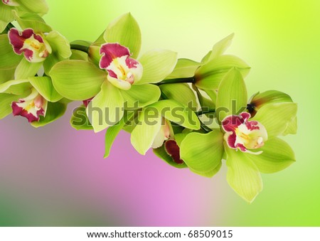 green orchid - stock photo