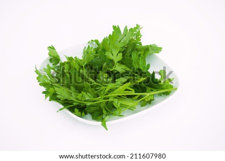 Green Organic Parsley - stock photo
