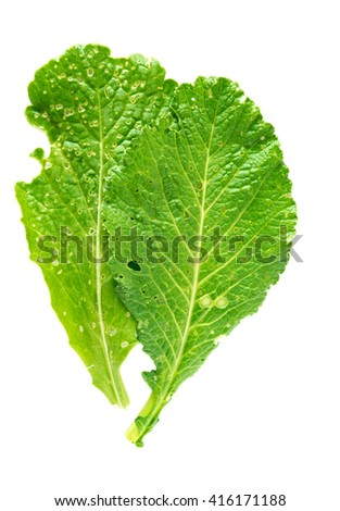 Green organic vegetable  leaf with hole make from Insect on white background  ,No Insecticide concept