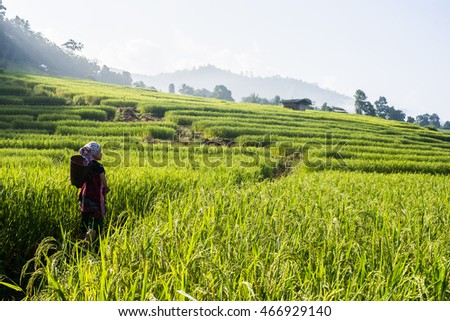 green paddy field view hilltribe life style outdoor