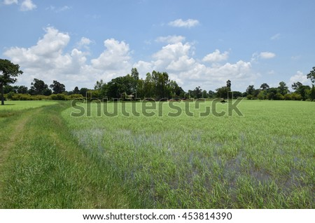 Green paddy rice fields with beautiful sky and cloud at noon in Thailand.( By soft focus and soft blurred.)