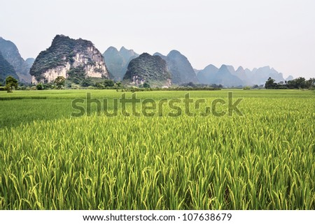 Green paddy with oddly shaped Karst mountains on the background in Yangshuo, Guangxi Province, China