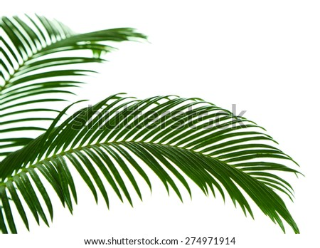Green palm branches on light background - stock photo