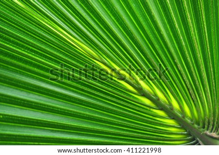Green palm leaf background - stock photo