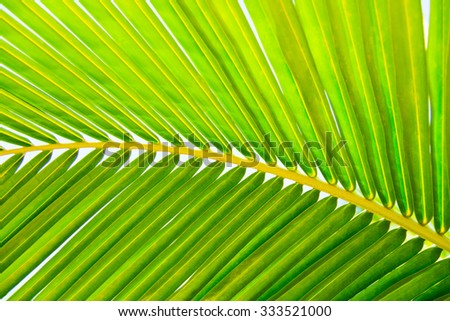 green palm leaf background with dew drops - stock photo