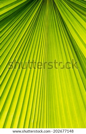 Green palm leaf close up background. - stock photo